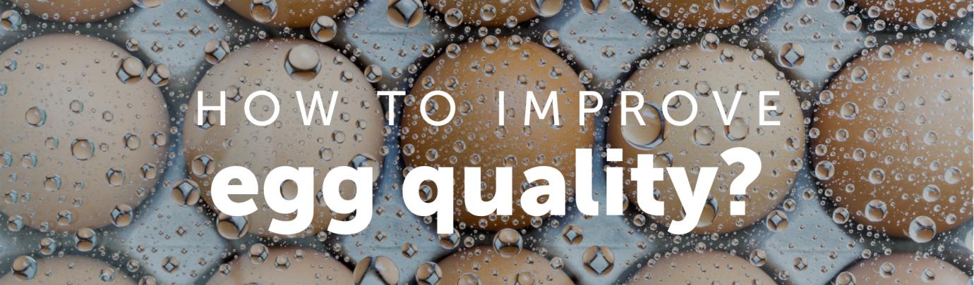 How to improve egg quality?
