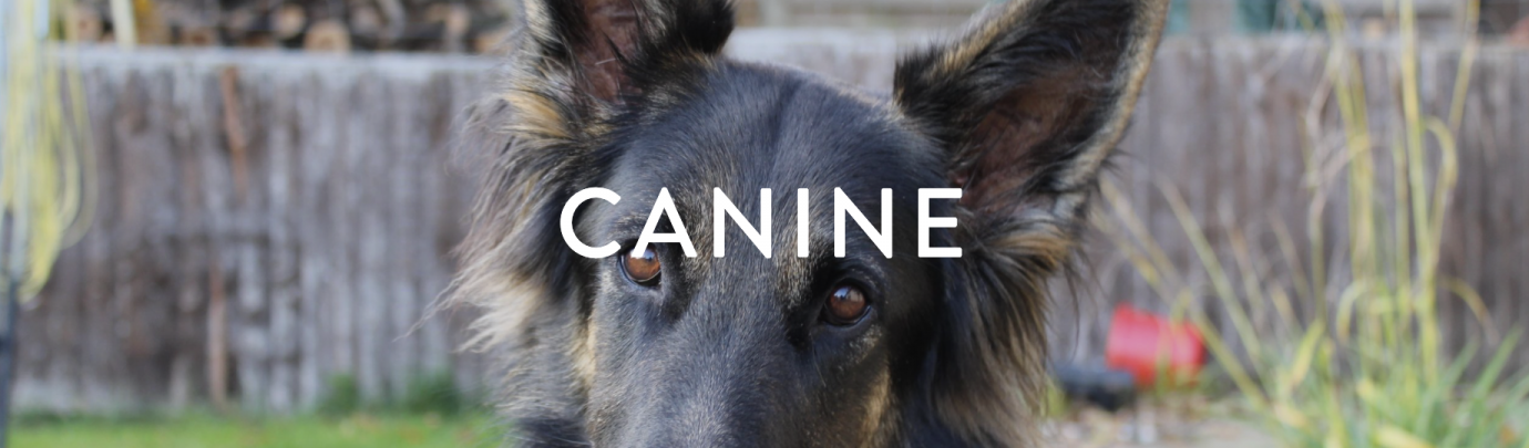 Canine Behaviour